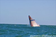 Прыгающий кит