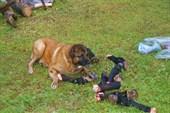 собака и копыта