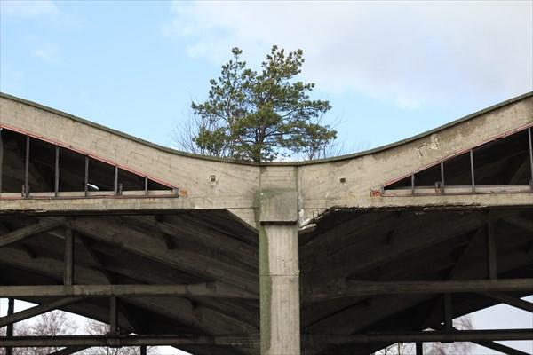 Деревья проросли на крыше
