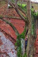 Деревья, уходящие в вечность. Бальга.