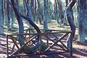 Особо охраняемые танцующие деревья