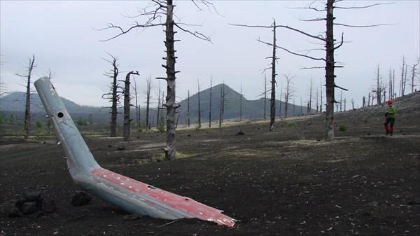 на фото: Мертвый лес