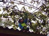 Собираем виноград в заброшенном саду