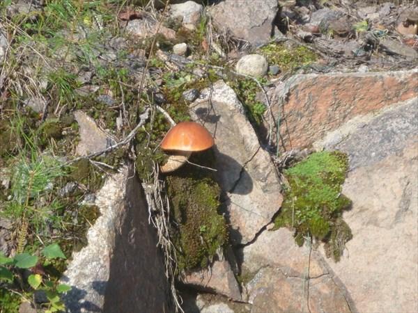 И на камнях растут грибы