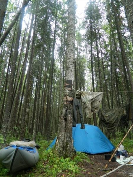 Стоянка в лесу.