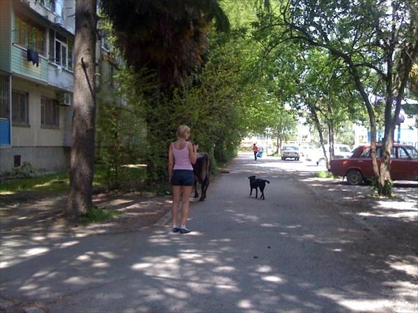За коровой пес, за псом - девушка, за девушкой - я