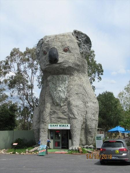 Гигантская коала.