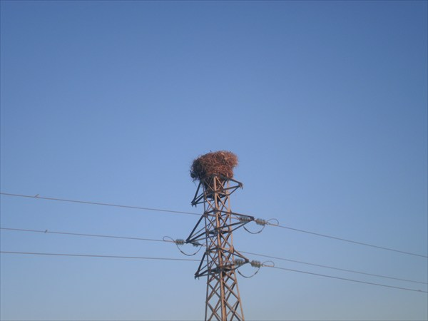 Гнездо на ферме