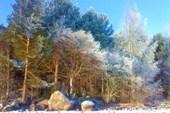 Зимой по Сямозеру