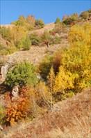 Осенний лес - Ойгаинг