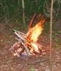 на фото: В лесу