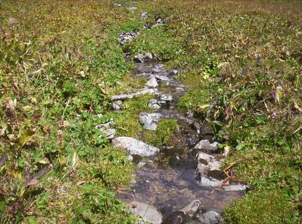 Живая вода Алтая