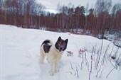 Неугомонный пёс -шайтан