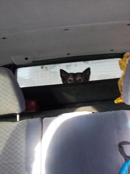 На дорогу не только водитель смотрит