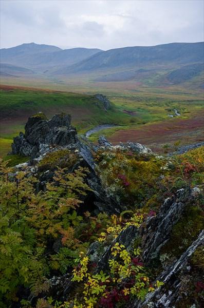 Кусты и скалы