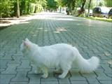 Благовещенская коша