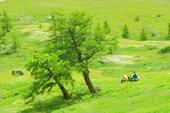 На зеленой полянке