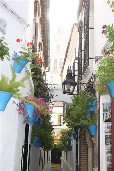 Улица цветов