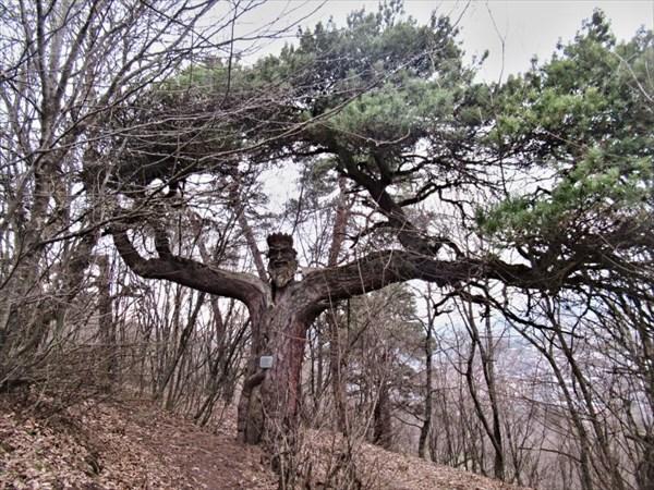 Царь-дерево