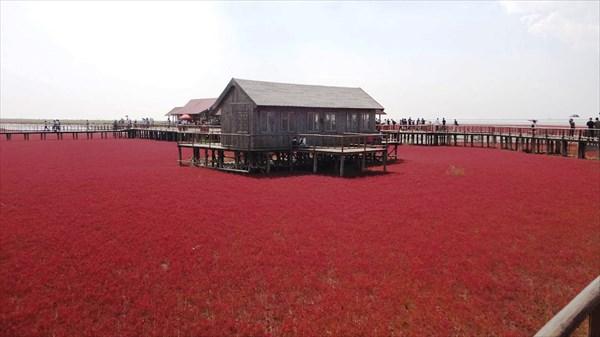 Red-Beach_Panjin_China-wallpaper