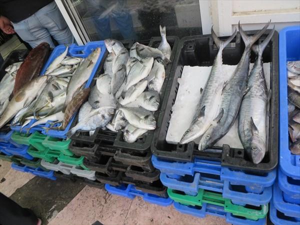 174-Рыба