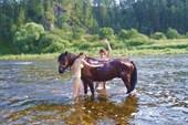 Моем коней