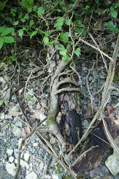 Природная рука