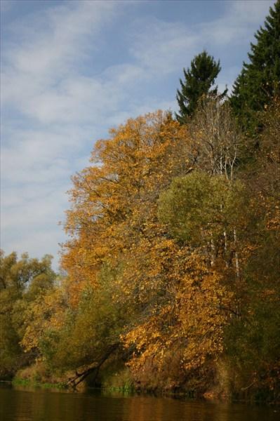 оранжевое дерево