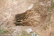 перекати поле у входа в одну из пещер