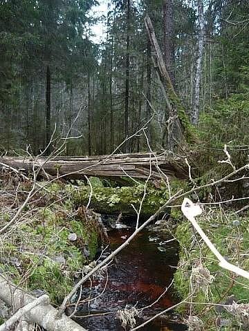 Лесные пейзажи