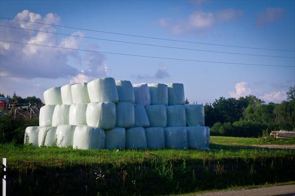 Так выглядят стога сена в Латвии