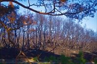 Через несколько километров велодорожка пошла через выжженный лес