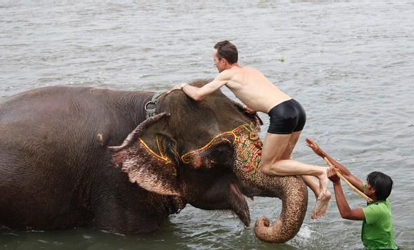 залезли в слона картинки