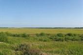 Степи Западно-Сибирской равнины.