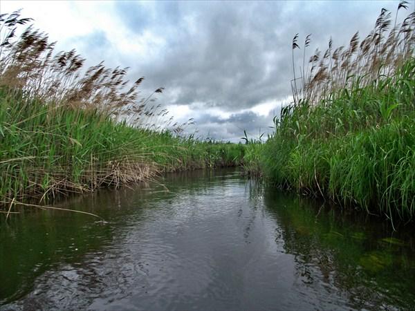 Река, местами широкая часто переходит в узкие каналы...