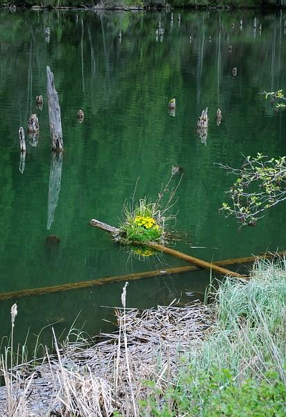 lacul_rosu_2