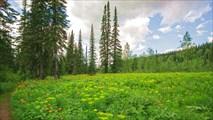 Цветущая поляна в тайге