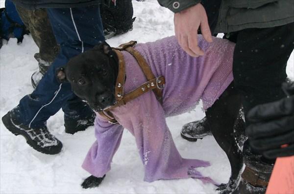 штурмовой пес