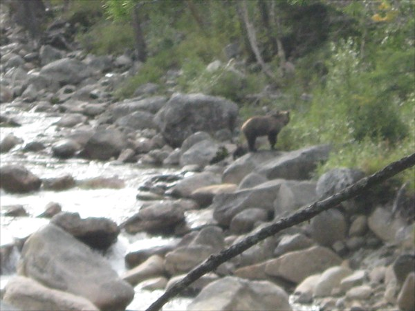 Ждет медвеженка