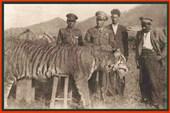 Охотники на тигров