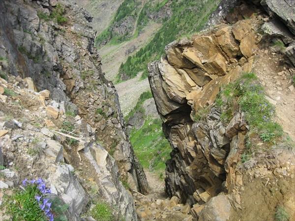 Цветы среди скал.
