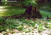 Листья после потока