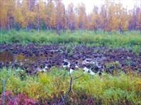 Это болото забыть сложно. Переходили с рюкзаками, по пояс.