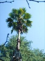 Ах, мне бы птицей в небе-Сухумский ботанический сад