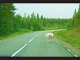 По дороге в Финляндию