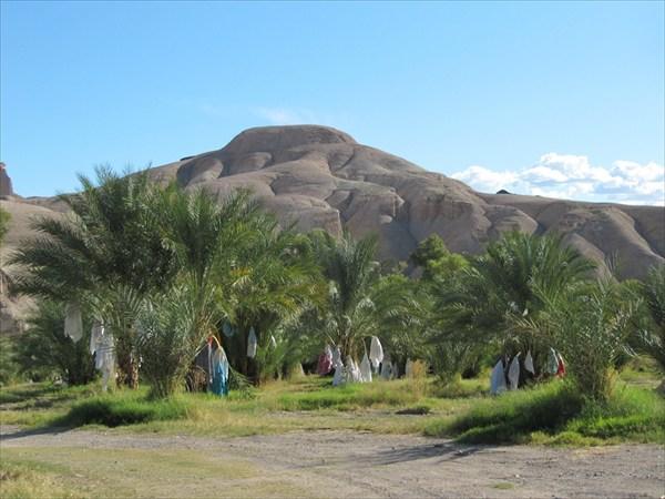 Китайское ранчо. Финиковые пальмы