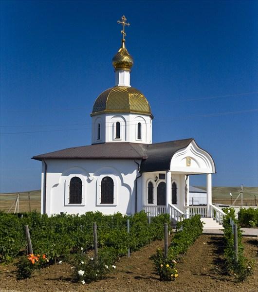Виноград выращивают буквально везде!
