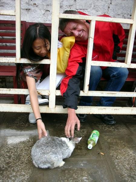 Дружба через кролика