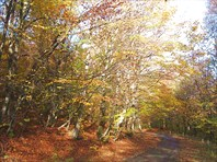 дорога в дилижанском лесу
