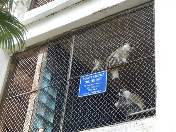 Питомник обезьян Сухуми